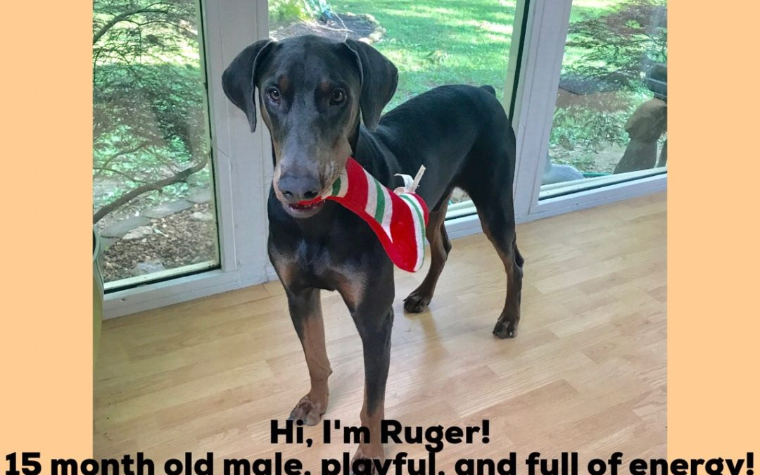 RUGER (PENDING ADOPTION)